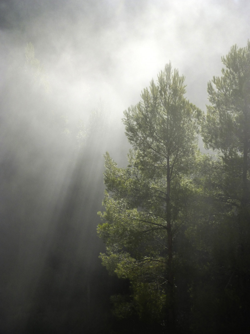 forest-1109180_1920